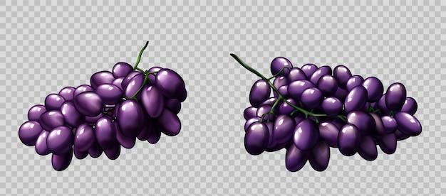 Realistische druiven trossen rijpe paarse bessen set