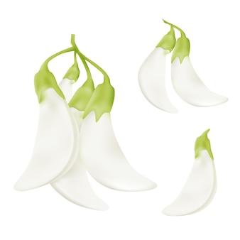 Realistische elementen mooie witte plantaardige kolibrie sesban agasta (sesbania grandiflora bloem).
