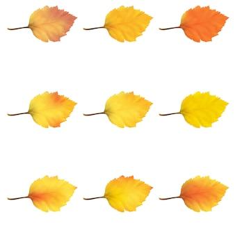 Realistische elzenboombladeren in veranderende herfstkleuren.