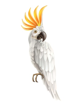 Realistische exotische kaketoe papegaai