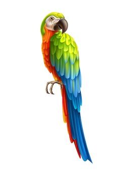 Realistische exotische papegaai