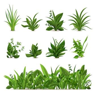 Realistische grasstruiken. groene verse planten, tuin seizoensgebonden lente en zomer greens en kruiden, botanische spruitset. natuurlijke gazon weide struiken, bloemen vegetatie grens