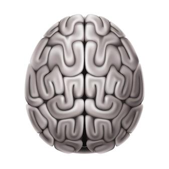Realistische grijze ongezonde anatomiestructuur van de hersenen. zenuwstelsel orgel. menselijk cerebellum-orgaanmodel voor medicijnen, farmacie en onderwijs.