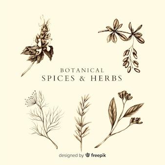 Realistische hand getrokken specerijen en kruiden schetst collectie