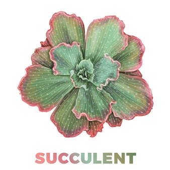 Realistische hand getrokken succulente illustratie