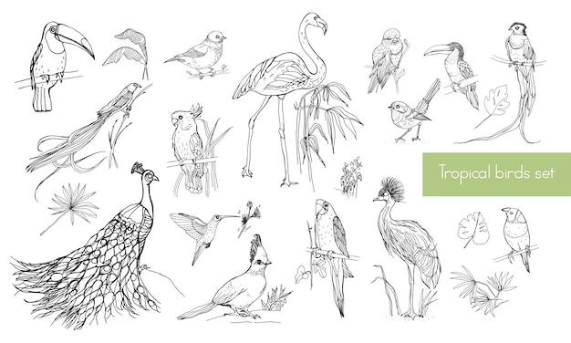 Realistische handgetekende contourcollectie van prachtige exotische tropische vogels met palmbladeren. flamingo's, kaketoe, kolibrie, toekan, pauw.