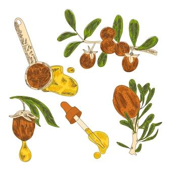 Realistische handgetekende jojoba-elementenverzameling