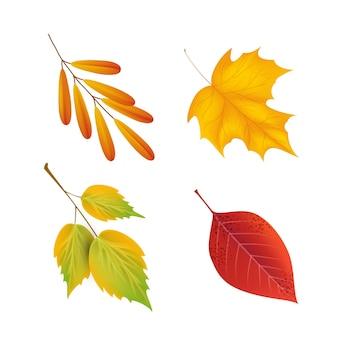 Realistische herfstbladeren collectie