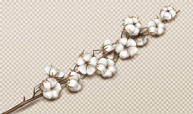 Realistische katoenen tak met bloemen en stengel