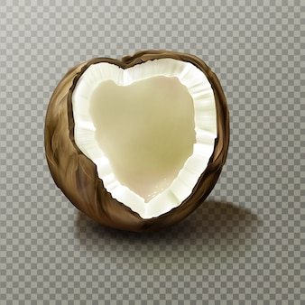 Realistische kokosnoot, zeer gedetailleerde lege kokosnoot
