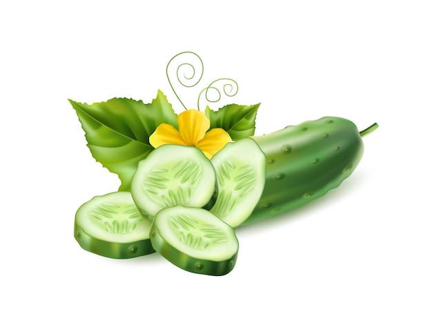 Realistische komkommer met groene stengelbladeren en bloemen. biologische plantaardige pakket ontwerpelement. gezonde verse plakjes komkommer met loof. landbouwproduct, zadenontwerp.