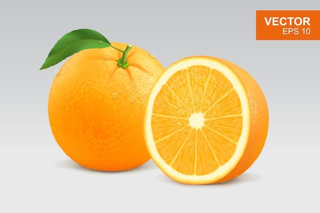 Realistische oranje illustratie