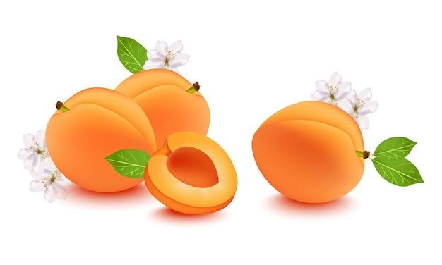 Realistische perzik en bloembloesem. vers fruit op witte achtergrond