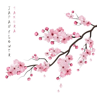 Realistische sakura-afdeling