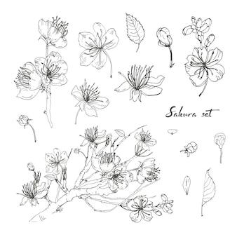 Realistische sakura hand getekende set met toppen, bloemen, bladeren, tak.