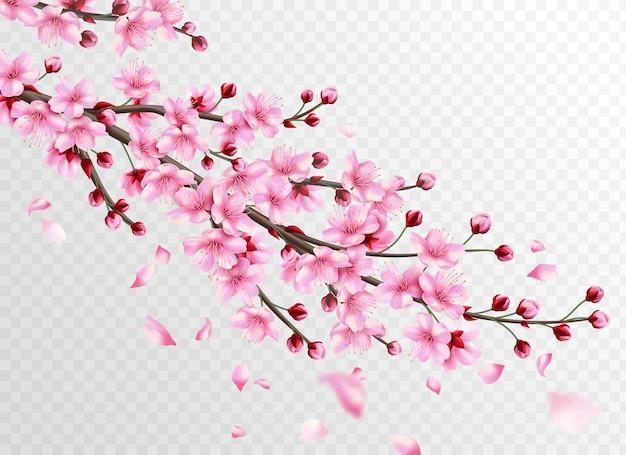 Realistische sakura met roze bloemen en vallende bloemblaadjes