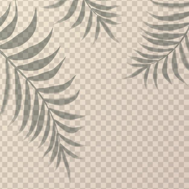 Realistische schaduw met palmtakken van drieën