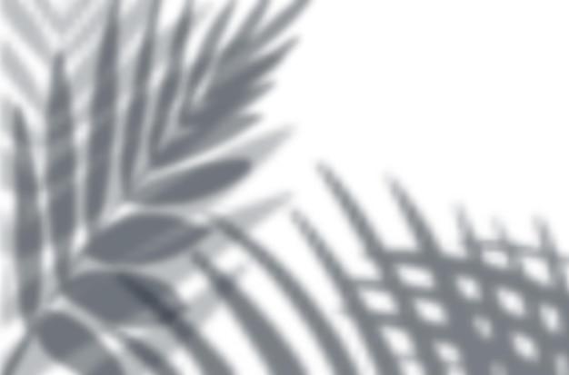 Realistische schaduw-overlay-effecten mockup bovenaanzicht compositie met exotische bladeren schaduwen op de muur