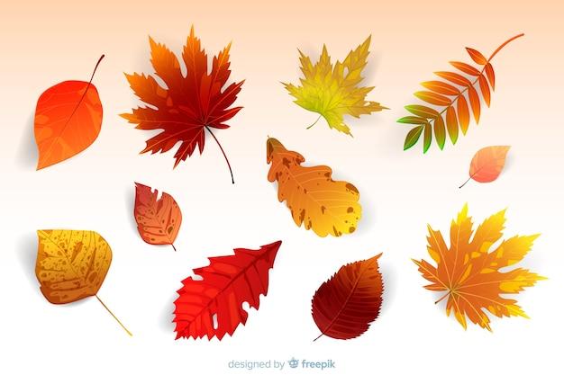 Realistische stijl herfstbladeren collectie