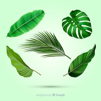 Realistische tropische bladcollectie
