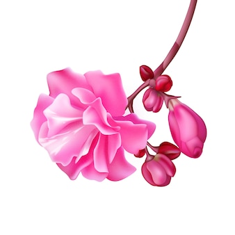 Realistische tropische bloem tak bud exotisch