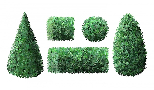 Realistische tuinstruiken. topiary buxus tuinman groenblijvende hek met bladeren, geometrische boom kroon struik gebladerte natuur groene seizoensgebonden struik illustratie set
