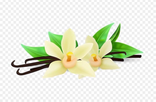Realistische vanillebloemen en stokken op transparante achtergrond