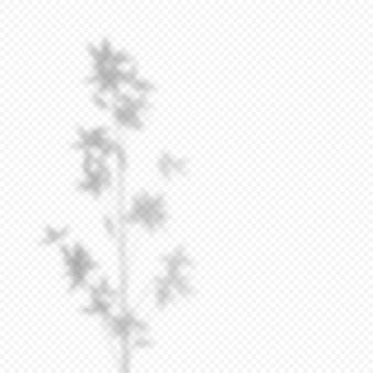 Realistische vector transparante overlay blured schaduw van tak bamboe bladeren. ontwerpelement voor presentaties en testmodellen. overlay-effect van boomschaduw.