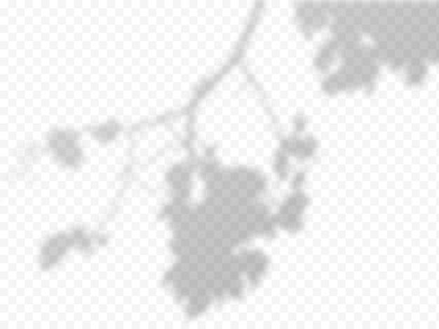 Realistische vector transparante overlay blured schaduw van tak bladeren. ontwerpelement voor presentaties en testmodellen. overlay-effect van boomschaduw.