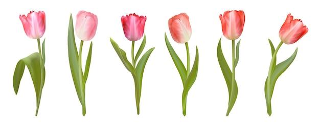 Realistische vector tulpen set. lente roze bloemen geïsoleerd op een witte achtergrond. tulpenbloesem sjablooncollectie voor ontwerp, illustratie, print