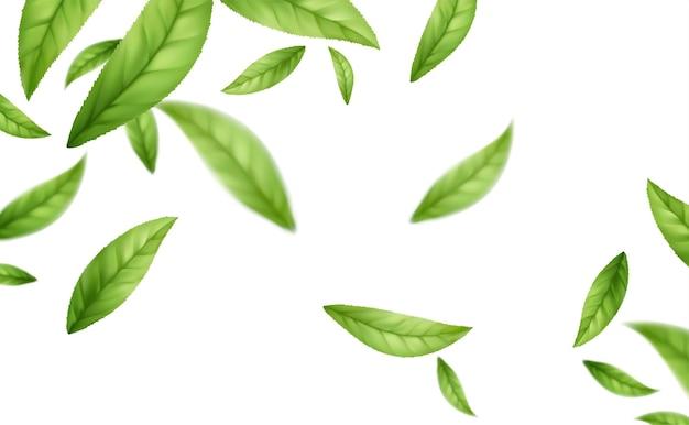 Realistische vliegende vallende groene theebladeren geïsoleerd op een witte achtergrond. achtergrond met vliegende groene lentebladeren. vector illustratie
