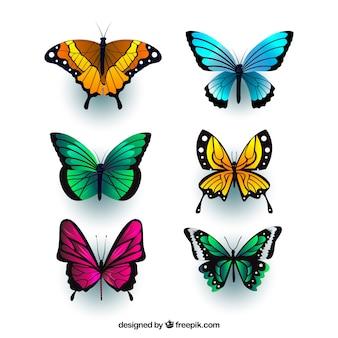 Realistische vlinders met verscheidenheid van kleuren