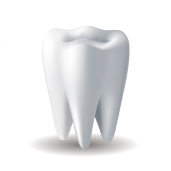 Realistische witte tand op witte achtergrond. stomatologie pictogram. realistische afbeelding.