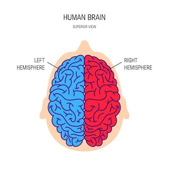 Rechter- en linkerhersenhelft van een brein in vlakke stijl