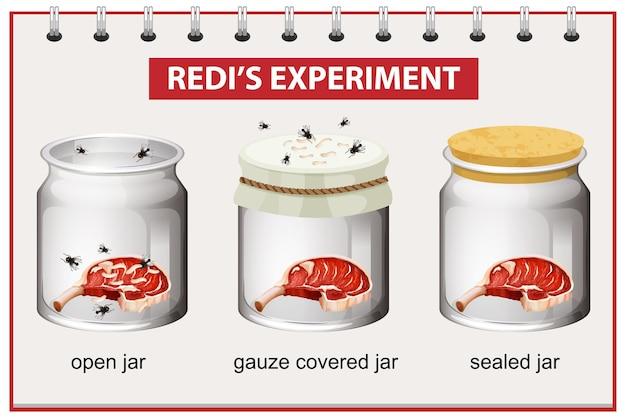 Redi's experimentdiagram voor het onderwijs