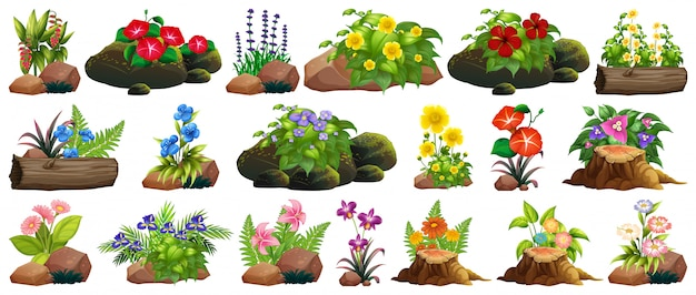 Reeks kleurrijke bloemen op rotsen en hout