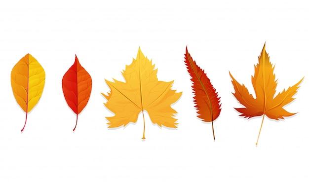 Reeks kleurrijke de herfstbladeren.