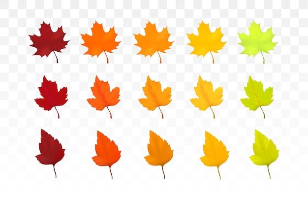 Reeks kleurrijke verschillende geïsoleerde vormbladeren