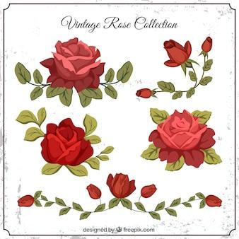 Reeks uitstekende rozen met bladeren