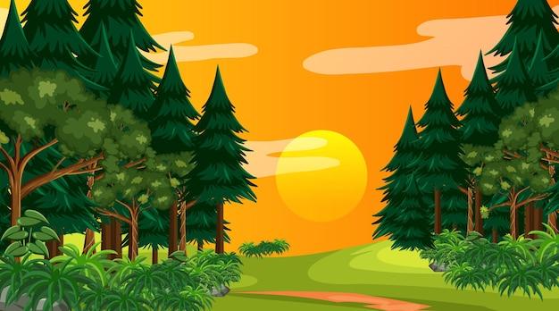 Regenwoud of tropisch bos bij zonsondergang tijdscène