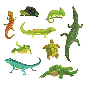 Reptielen en amfibieën set van illustraties
