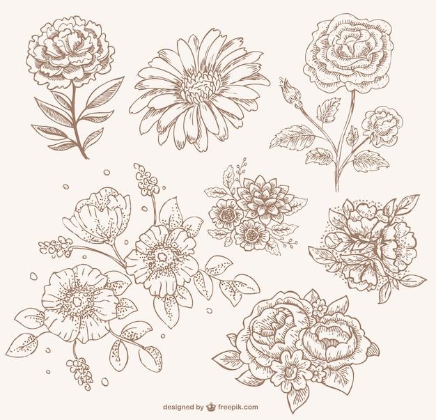 Retro sepia bloemen lijntekeningen