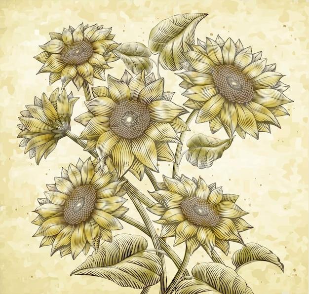 Retro zonnebloemelementen, aantrekkelijke zonnebloemen in etsarceringstijl met kleuren