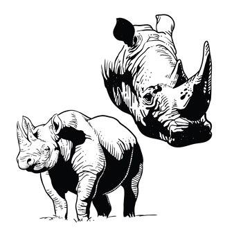 Rhinos line art vector