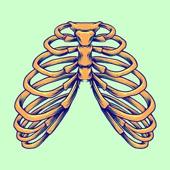 Ribbenkast anatomie menselijke botten vectorillustraties voor uw werk logo, mascotte merchandise t-shirt, stickers en labelontwerpen, poster, wenskaarten reclame bedrijf of merken.