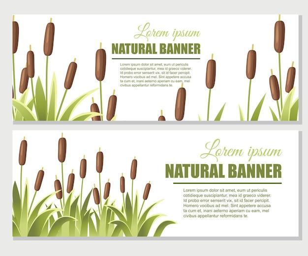 Riet in groen gras. riet plant. groene moeras riet gras banner set
