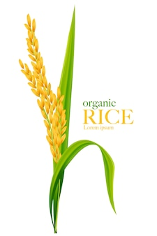 Rijst realistische afbeelding