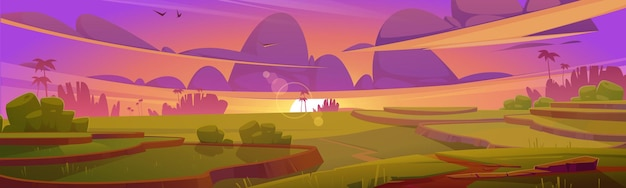 Rijstveldterrassen groene padie bij zonsondergang