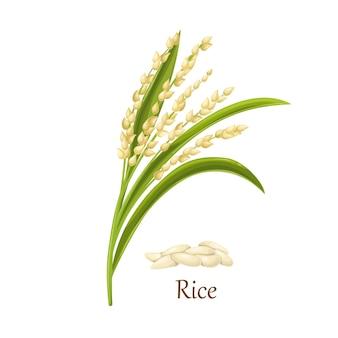 Rijstzaad van het gras oryza sativa aziatische rijst of oryza glaberrima