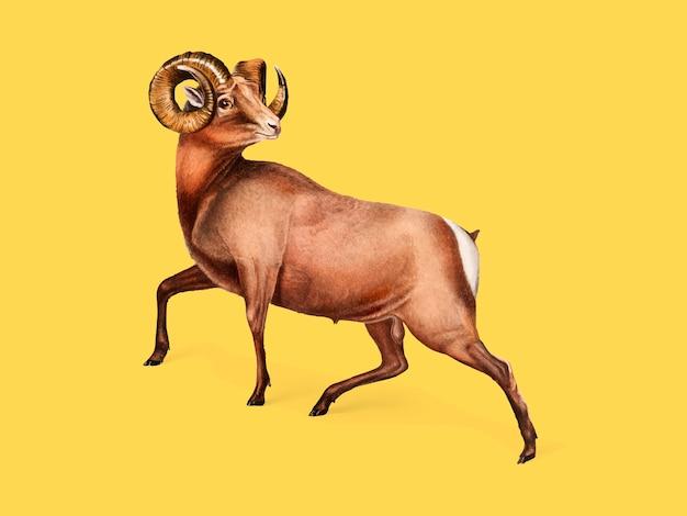 Rocky mountain sheep-illustratie